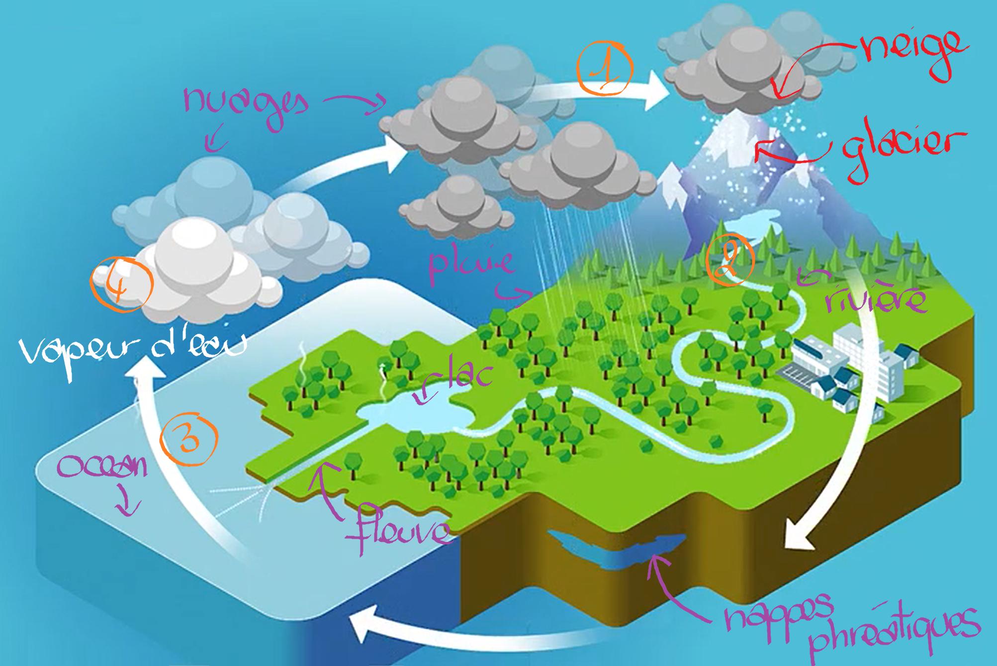 Cycle de l'eau légendé